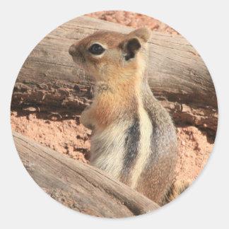 Coloradogrundeichhörnchen Runder Aufkleber