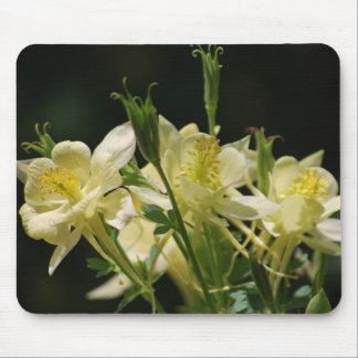 Columbine-Blume und seine Bedeutung Mousepad