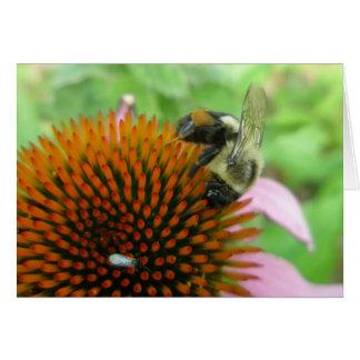 Coneflower u. Osttischler-Bienen-Einzelteile Karte