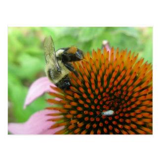 Coneflower u. Osttischler-Bienen-Einzelteile Postkarte