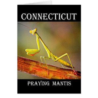 Connecticut betender Mantis Karte