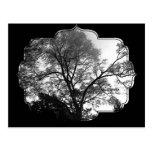 Coole Baum-Fotografie Postkarten