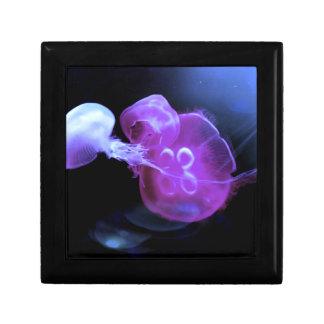 Coole rosa Quallen up nahes Geschenkbox