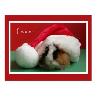 Coole Weihnachtsmeerschweinchen-Postkarte Postkarte