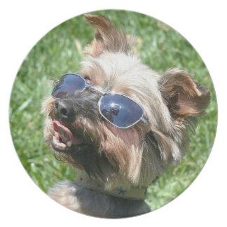 Cooler Yorkshire-Terrier Flache Teller