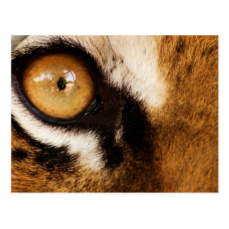 Cooles Tiger-Auge - Postkarte