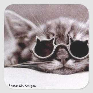 Coolste Katze lebendig - sqare Aufkleber