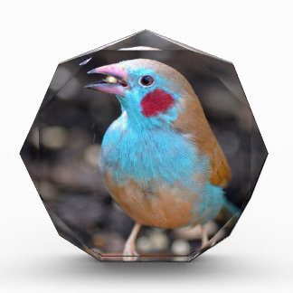 Cordon bleu-Fink Acryl Auszeichnung