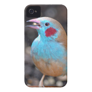 Cordon bleu-Fink iPhone 4 Hüllen