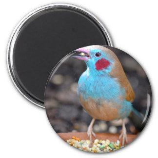 Cordon bleu-Fink Runder Magnet 5,1 Cm