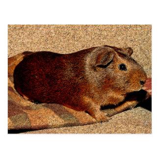 Corkboard Blick-Meerschweinchen Postkarte