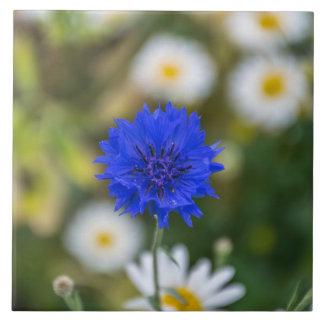 Cornflower-Keramik-Fotofliese Fliese