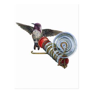 Costa-Kolibri an der Vogel-Zufuhr Postkarte