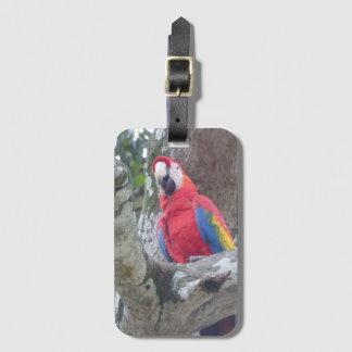 Costa Rica-Dschungel-Vogel-Gepäckanhänger Gepäckanhänger