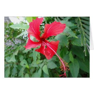 Costa Rican schöne Flora Karte