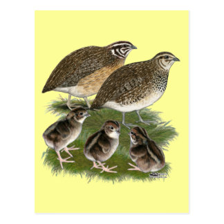 Coturnix-Wachtel-Familie Postkarte