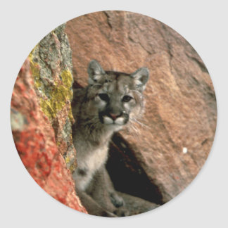 Cougar - Gebirgslöwe-Foto Runder Aufkleber