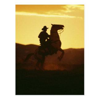 Cowboy auf der Züchtung des Pferds Postkarten
