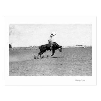 Cowboy, der einen sträubenden Stier reitet Postkarte