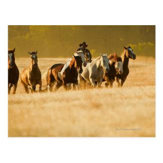 Cowboy, der Pferde 2 in Herden lebt Postkarte