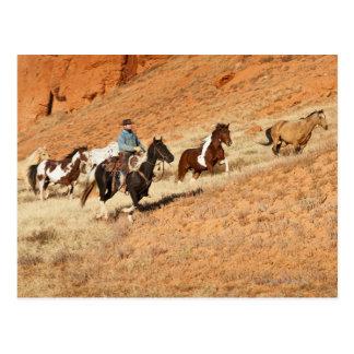 Cowboy, der Pferde in Herden lebt Postkarte