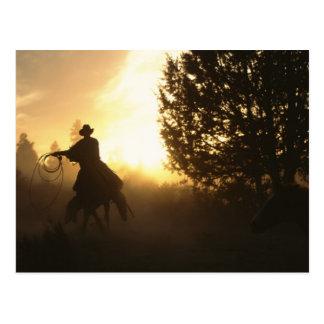 Cowboy mit Lasso im Sonnenuntergang Postkarte