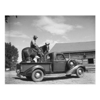 Cowboy mit Pferd in einem LKW Postkarte