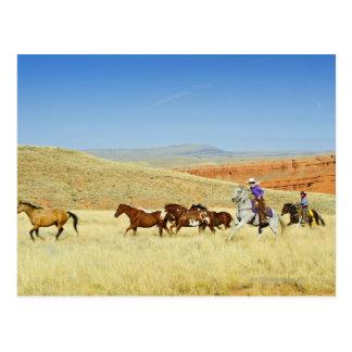 Cowboys, die Pferde in Herden leben Postkarte