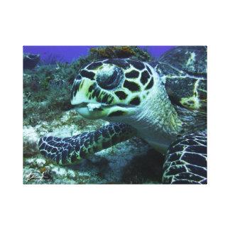 Cozumel-Schildkröte #2 Leinwanddruck