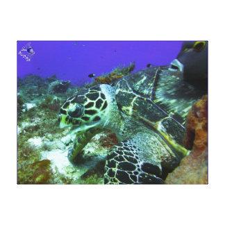 Cozumel-Schildkröte #3 Leinwanddruck