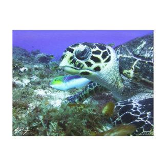 Cozumel-Schildkröte Leinwanddruck