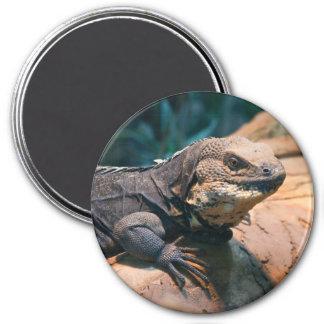 Ctenosaura melanosterna runder magnet 7,6 cm