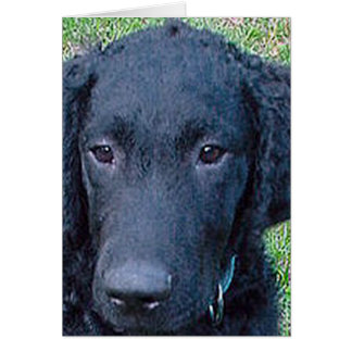 Curly_Coated_Retriever.png Karte