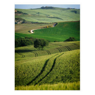 Curvy Linien in grüner Toskana-Postkarte Postkarte