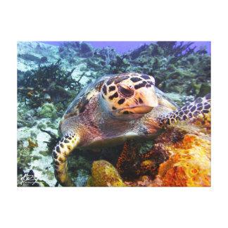 Cuzumel Schildkröte #4 Leinwanddruck