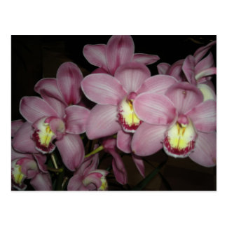 Cymbidium-Orchidee Postkarte