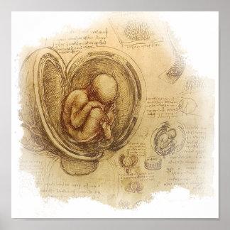 da Vinci - Embryo-Skizze Poster