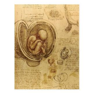 da Vinci - Embryo-Skizze Postkarten
