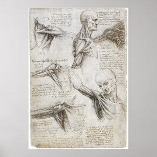 Da Vinci, LEONARDO - Studie der Anatomie Poster