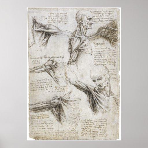 Da Vinci, LEONARDO - Studie der Anatomie Plakate
