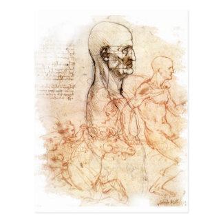 da Vinci -- Mann-und Pferdeskizze Postkarten