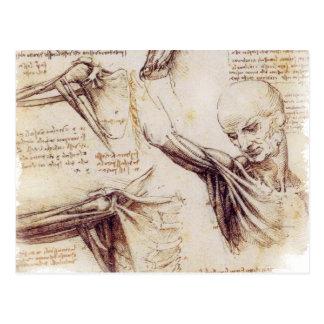 da Vinci -- Schulter-Skizze Postkarte
