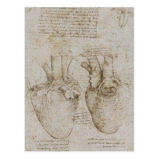 Da Vincis menschliche Herz-Anatomie-Skizzen Postkarten