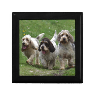 Dachshund Griffon Vendéen, großartiger Hund Geschenkbox