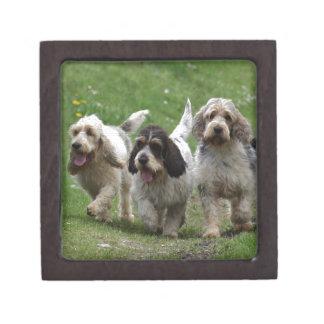 Dachshund Griffon Vendéen, großartiger Hund Schachtel