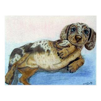 Dackel-Bauch Postkarte