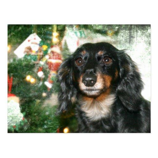 Dackel-Weihnachten Postkarte