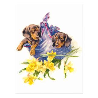 Dackel-Welpen in der Decke mit Narzissen Postkarte