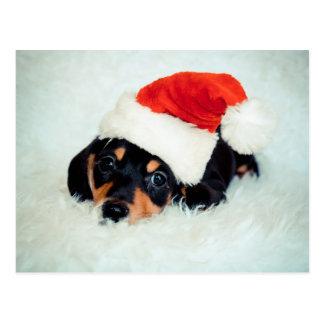 Dackel-Welpen-Weihnachten Postkarte
