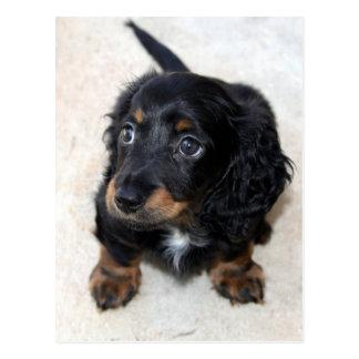 Dackelwelpenhundeniedliche schöne Fotopostkarte
